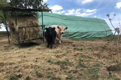 Impressionen-Rinder-Weide-Heuballen-400x266-1