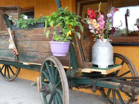 bauernmarkt-pillnitz-450x338